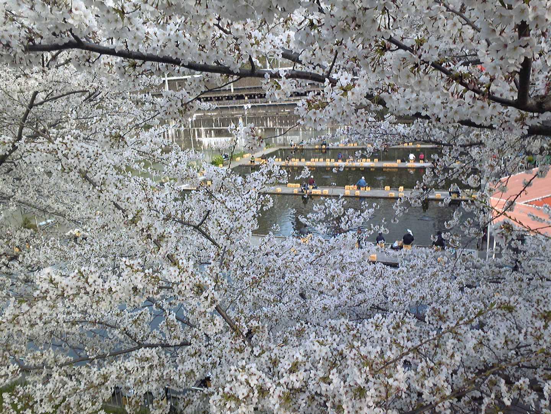 新宿 JR中央線沿いの釣堀